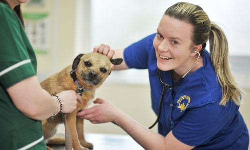 Vet Naomi examines a dog