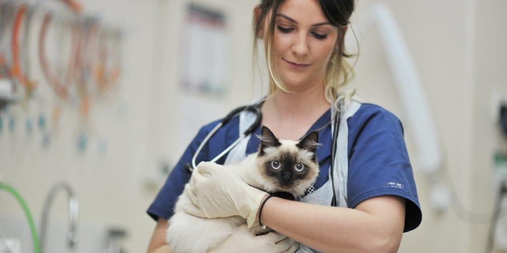 Nurse with burmese cat