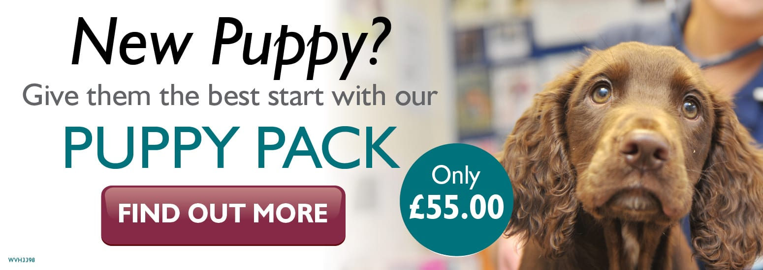 Puppy Pack covering puppy injections, flea & worm treatment, and much more for only £55 at vets in Knutsford