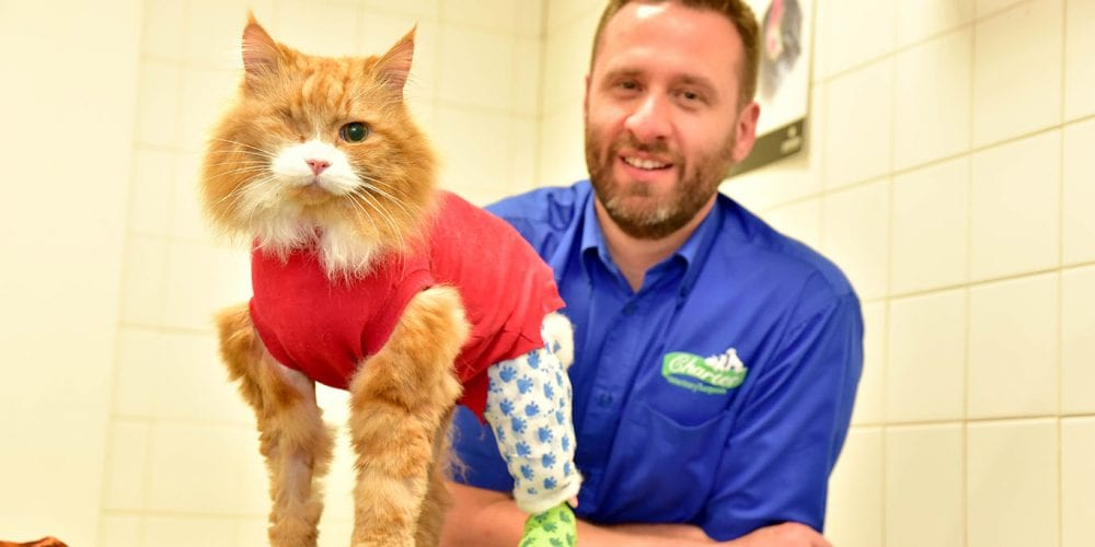 Ronney with vet Steve