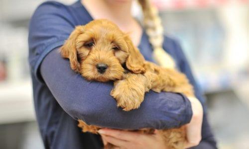 Nurse with puppy