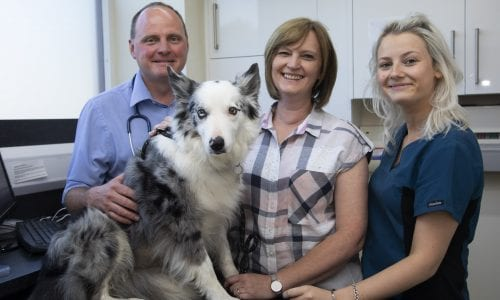 Sasha with vet, nurse and owner