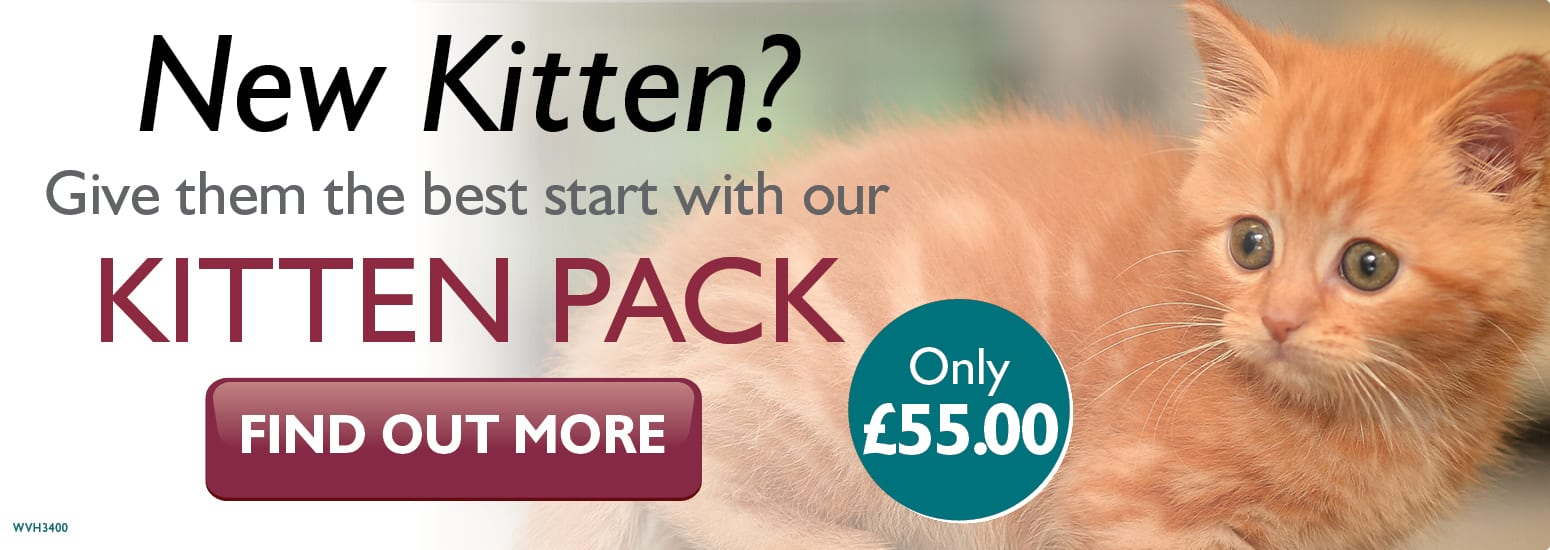 Kitten Pack covering kitten injections, flea & worm treatment, and much more for only £55 at vets in Knutsford