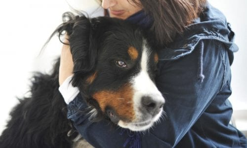 Dog being cuddled by owner